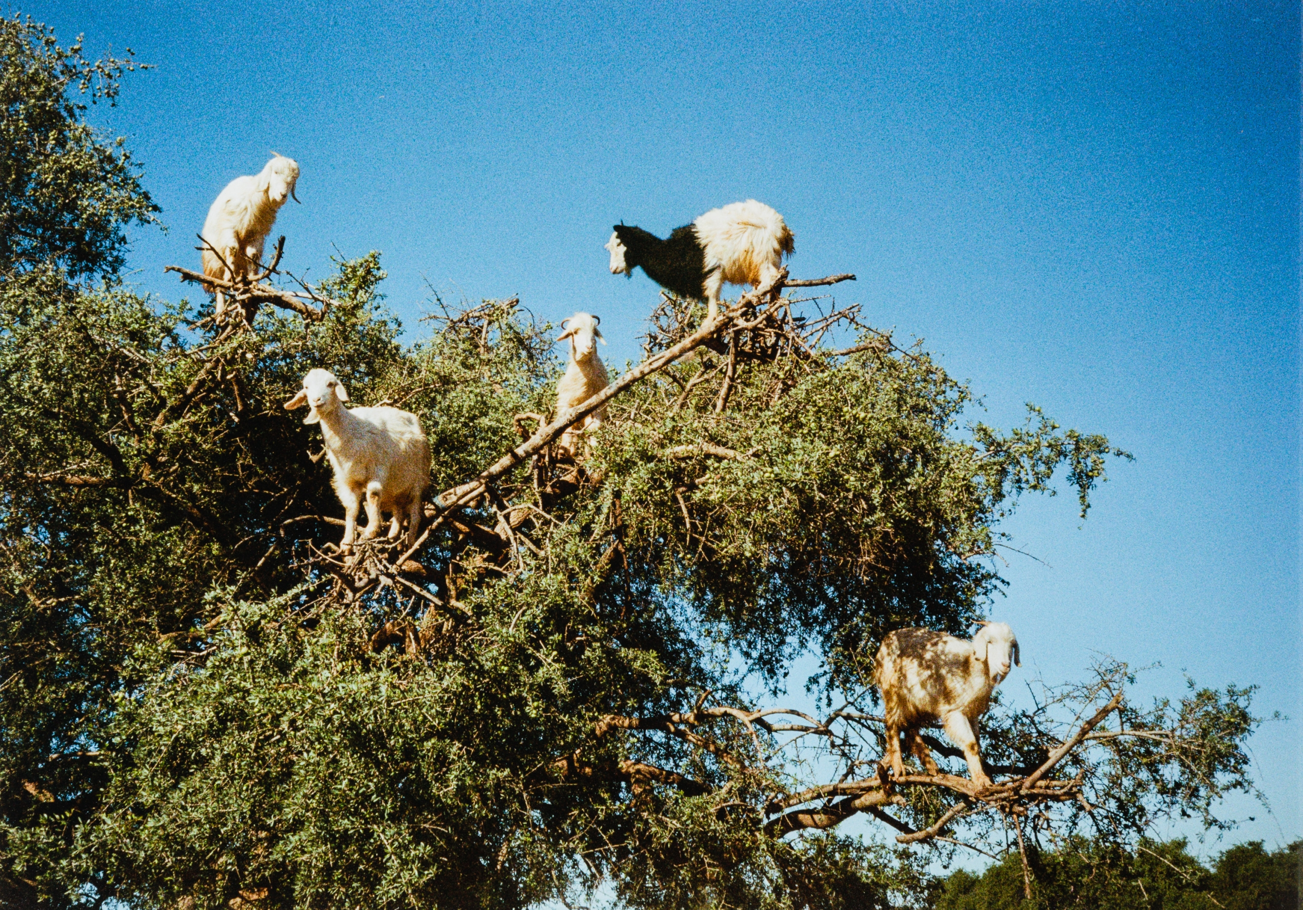 Anna Jermolaewa, About Goats and Women in Oil Production
