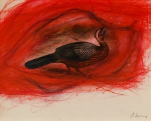 Arnulf Rainer, Penelope pileata - Red breasted Guan