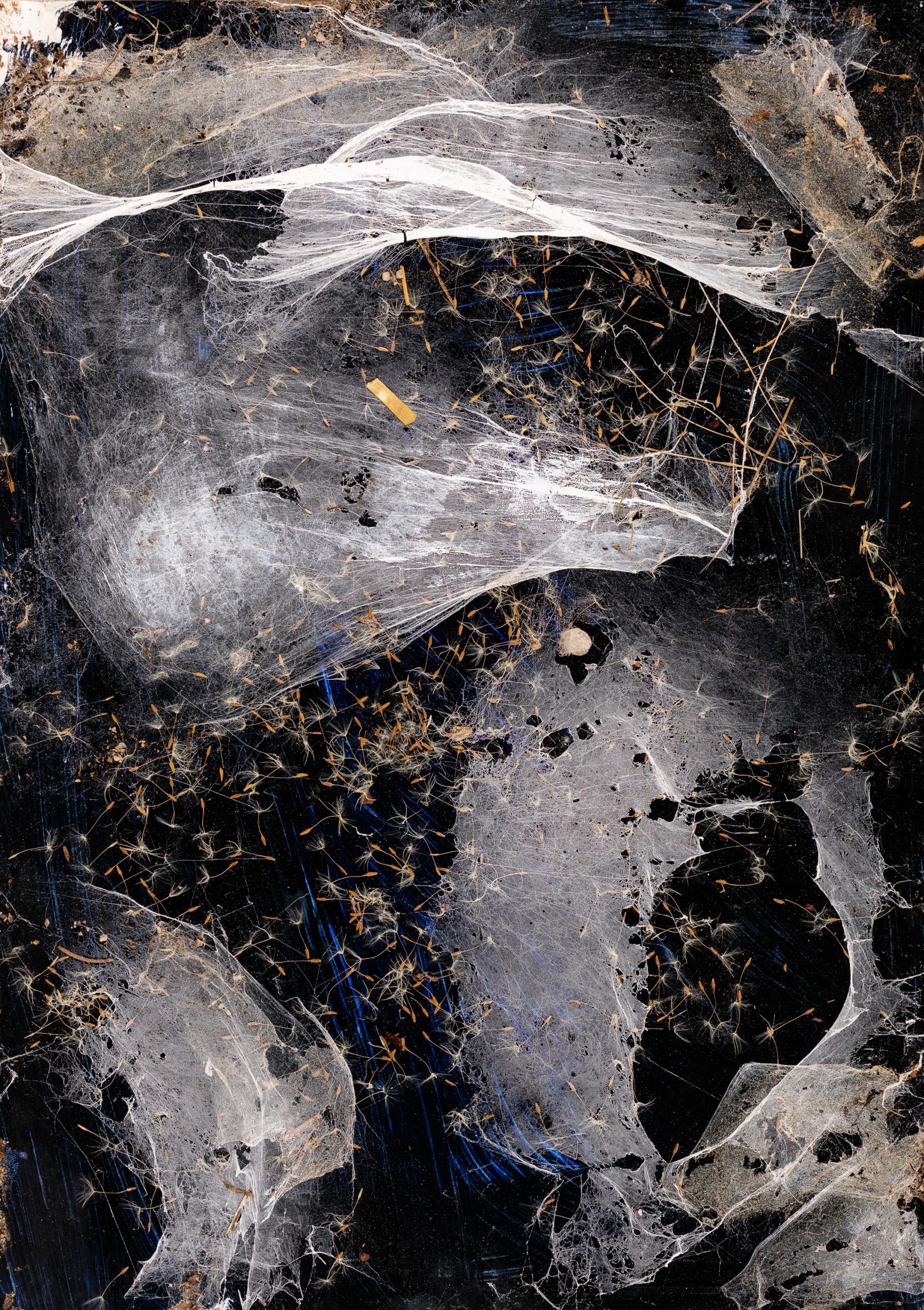 Christian Eisenberger, Die Falle ist gefallen (aus der Serie Spider Webs)