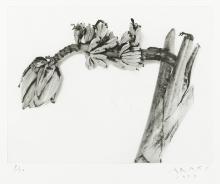 Nobuyoshi Araki, Shadows of Flowers (3 Werke/3 works)