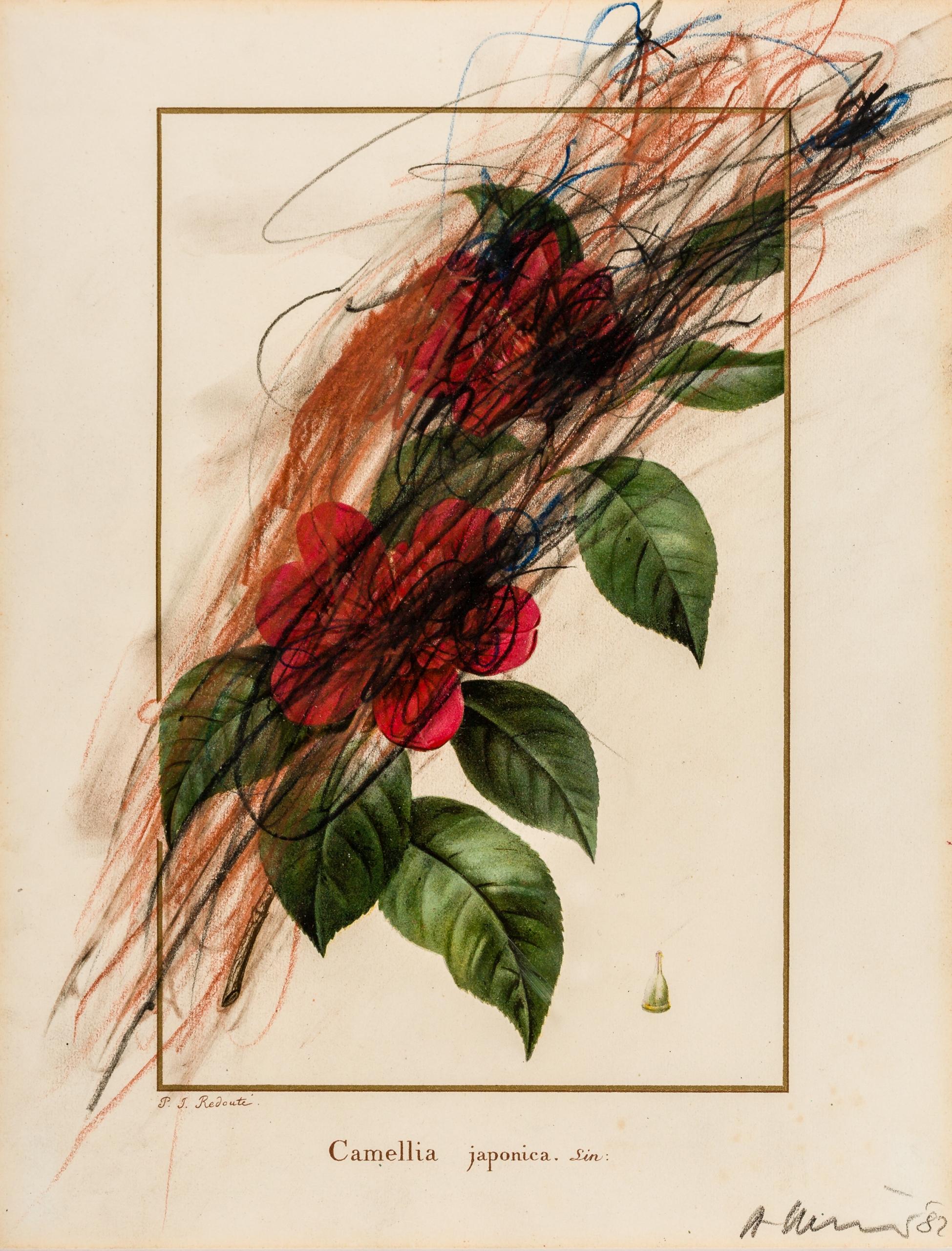 Arnulf Rainer, Camellia japonica (Blumenübermalung)